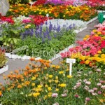istockphoto_9943363-garden-center-with-outdoor-fresh-flowers-for-spring-planting.jpg