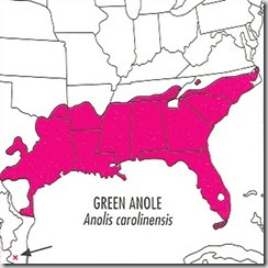 Green Anole map