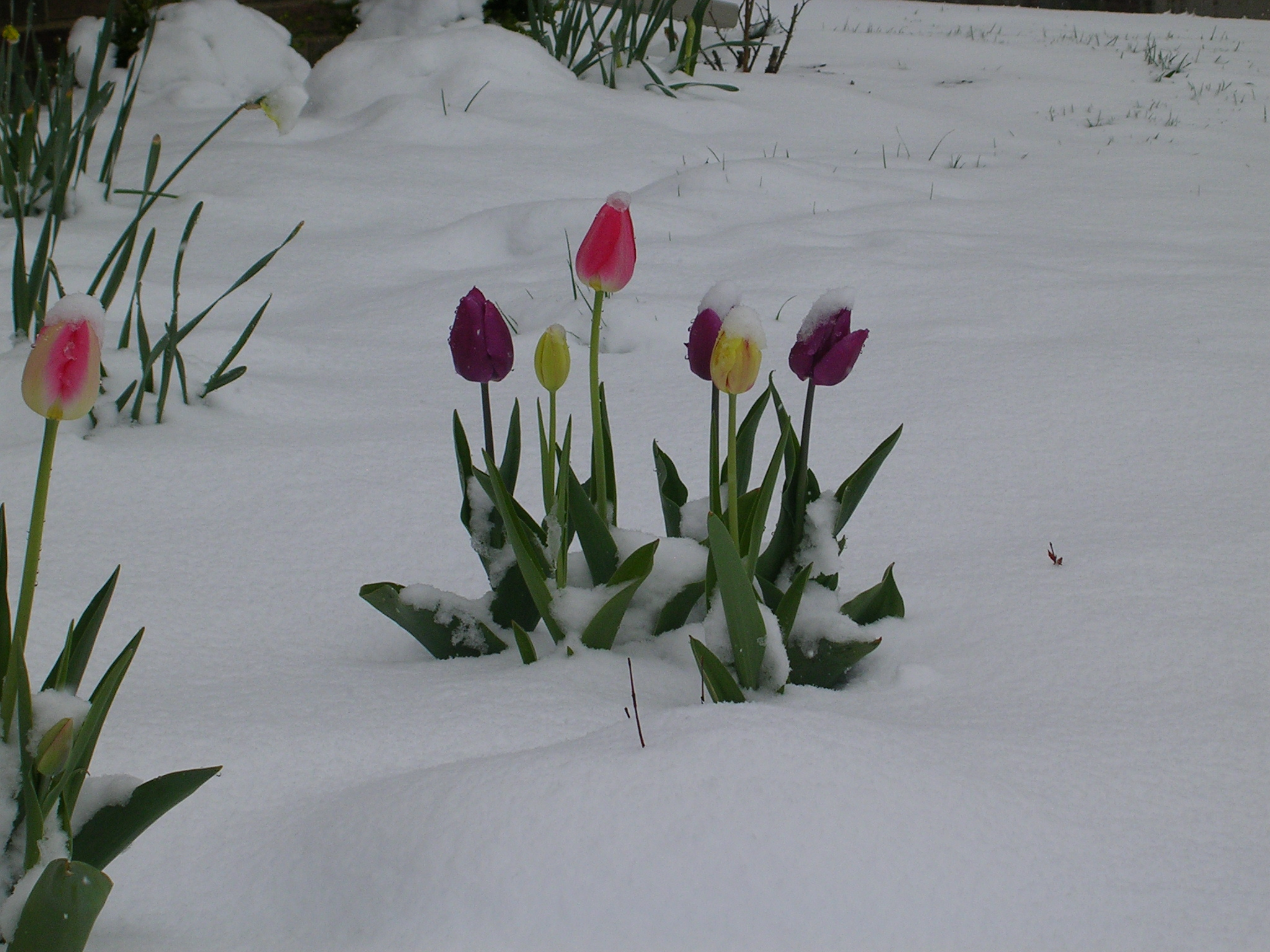 Spring will be on hold for a while wxbrad Blog